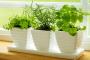 Herb garden in kitchen design
