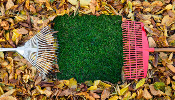 It's Time to Spring Clean Your Yard